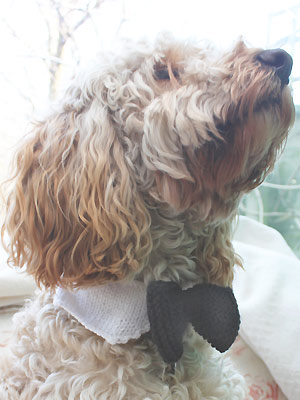 aay - Knit a dog bow-tie - Free knitting patterns - Craft - allaboutyou.com