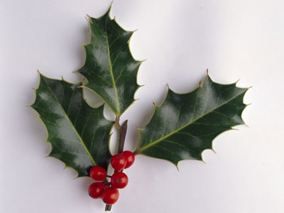 take a sprig of holly holly christmas decorations christmas