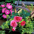 Trug filled with flowers - All our experts gardening tips - Craft - allaboutyou.com