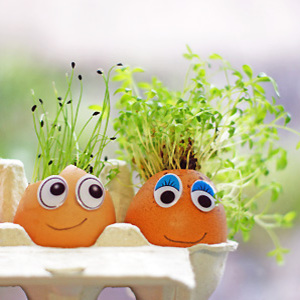 Getty cress and chives growing in eggshells - Grow an Easter egg decoration - Craft - allaboutyou.com