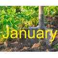 Spade in soil, plus 'January' text - Gardening jobs this month: January - Gardening ideas - Craft - allaboutyou.com